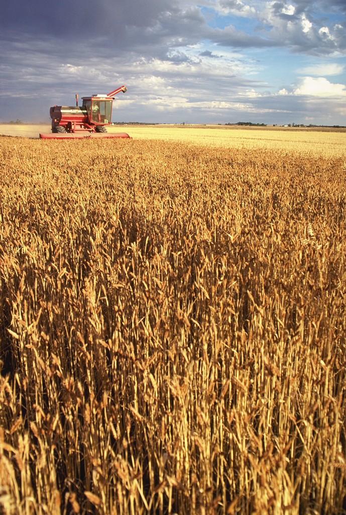 spiritualformation-images-harvest.jpg